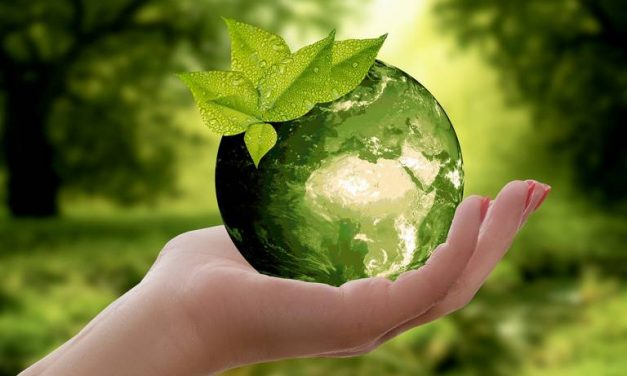 Biodegradable Packaging: Potentialities and Prospects
