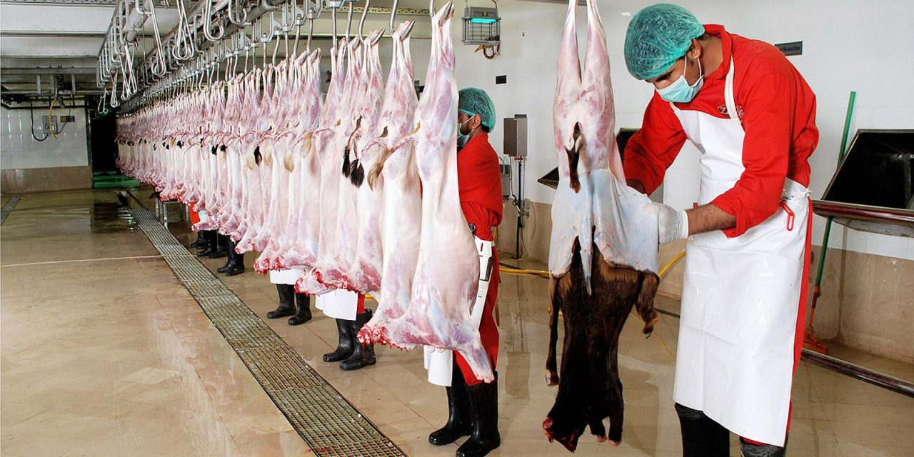 Modern Abattoir Practices and issues related to Animal Welfare, Meat Quality & Safety
