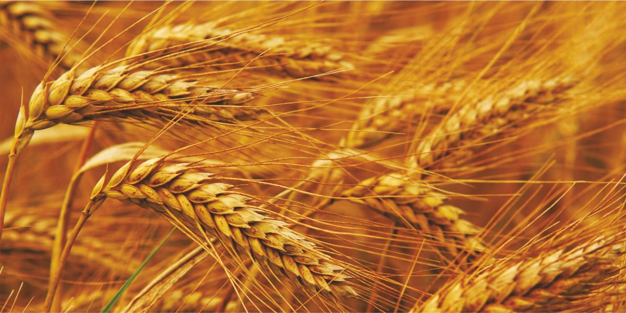 Agro-Processing Centres for Durable Crops: An Economically Viable Venture-II