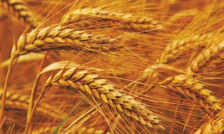 Agro Processing Centres for Durable Crops: An Economically Viable Venture-II