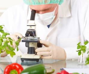 Role of R&D on Growth of Processed Food Industry