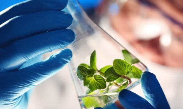 FSSAI Lay Down Rules for Genetically Modified Foods, but…