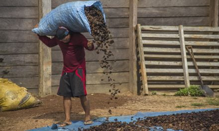 At home in the Amazon: Protecting biodiversity and livelihoods together  FAO