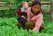 Hundreds of millions of family farmers in Asia-Pacific need help to ensure food security in the face of pandemic