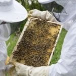 FSSAI order provides relief to honey producers