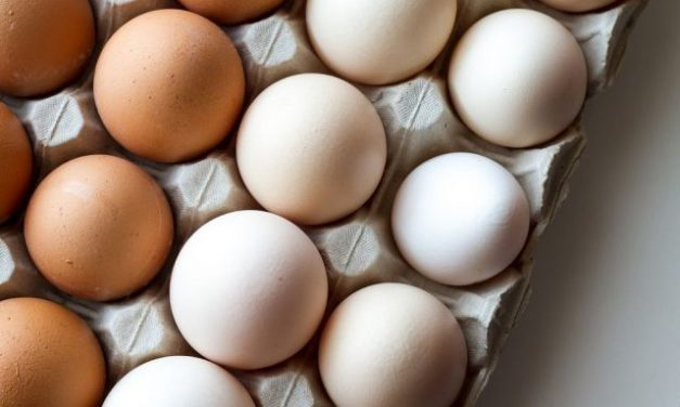 Importance of Eggs in Daily Diet