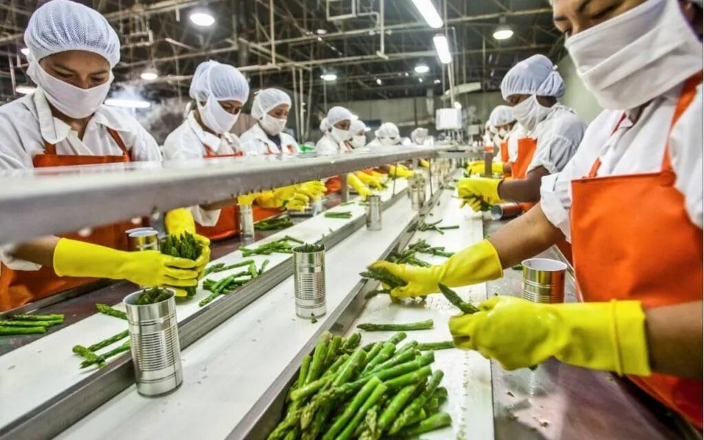 Best Government Subsidy Schemes for Small Food Business in India