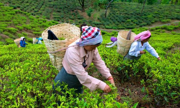 Tea Estates Join Eat Right Certification Programme