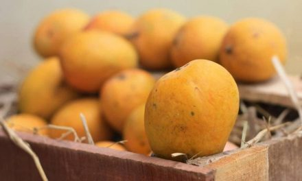No Indian mangoes for the US: second year in a row
