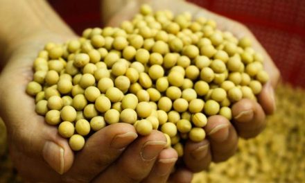SFPWA Demands Duty-free Import of Non-GM Food Specialty Soybeans Under the TRQ Scheme